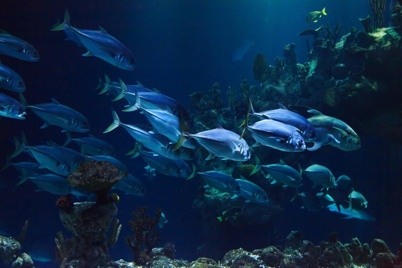 Aquarium Arnhem