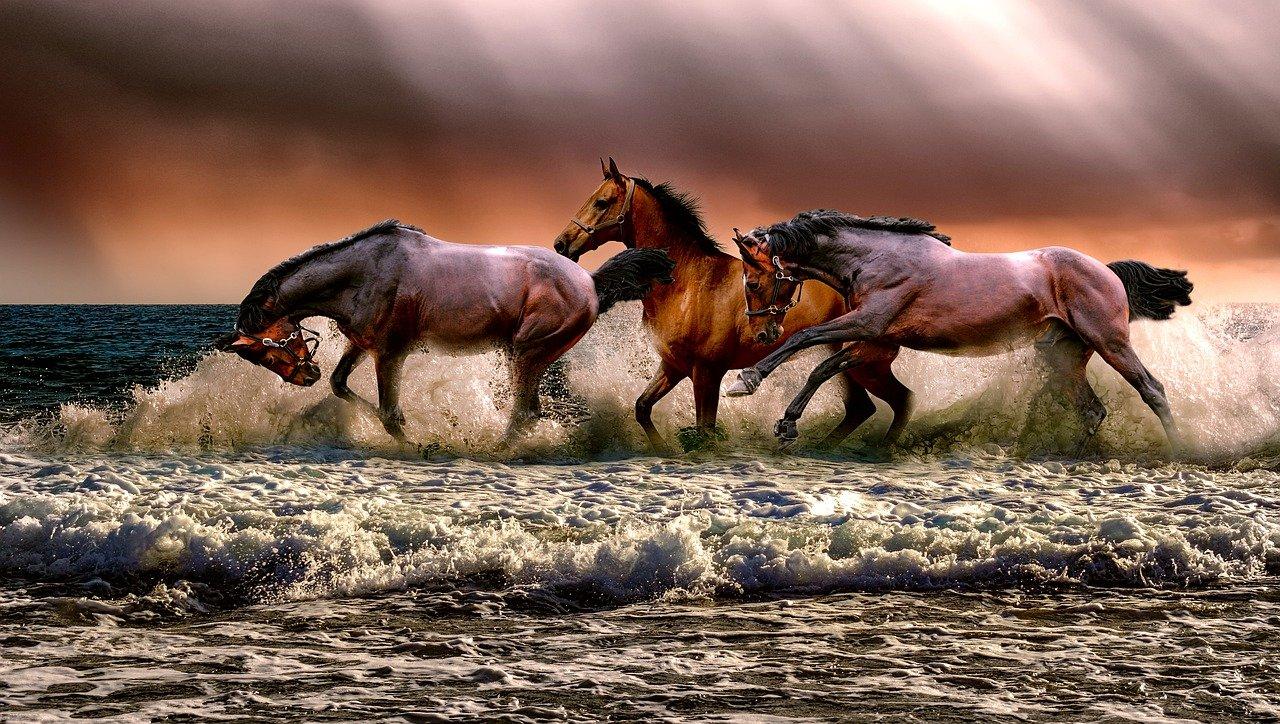 Aankoopbegeleiding paard