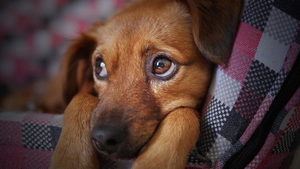 Puppycursus Leidschendam
