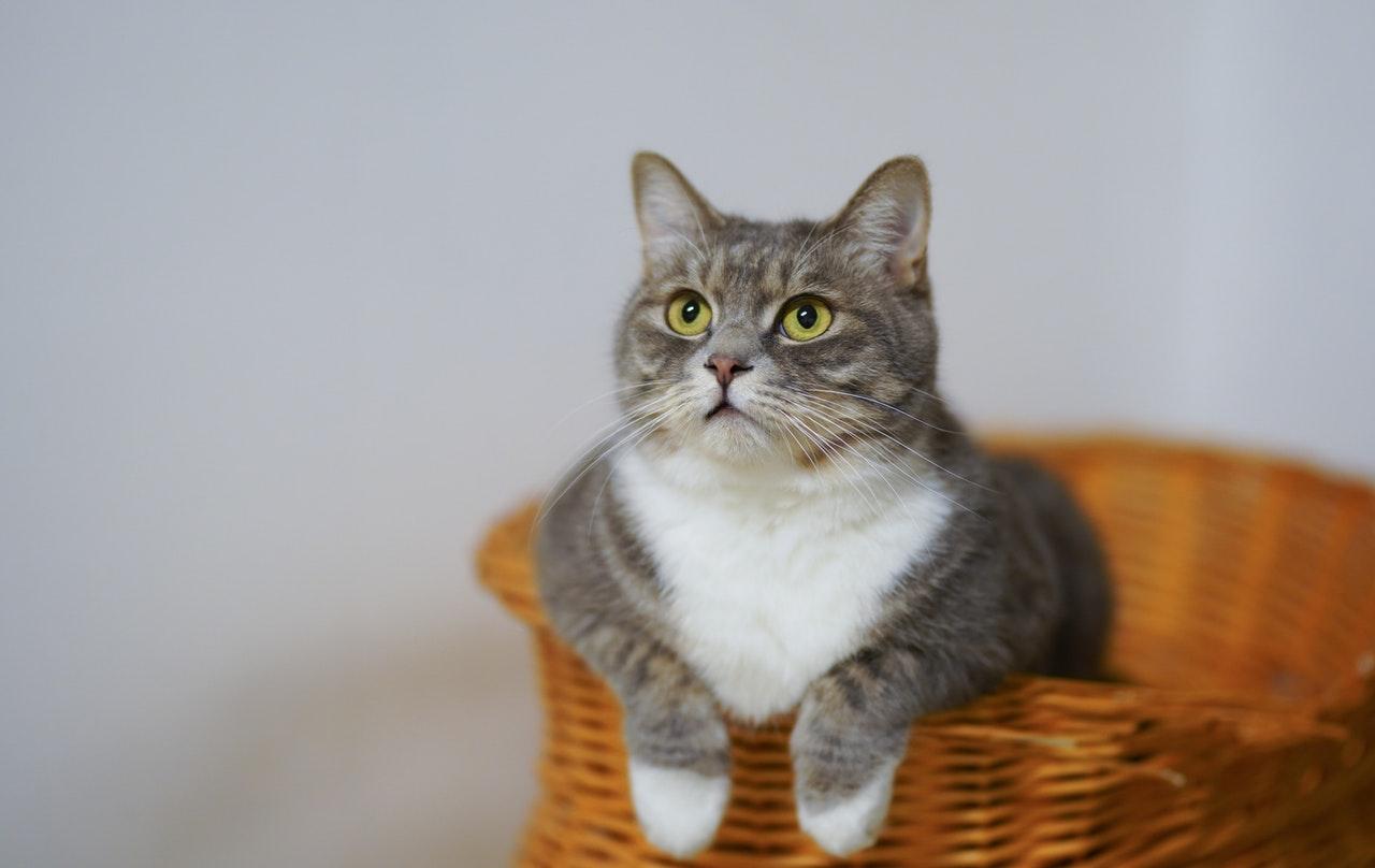 Kitten benodigdheden