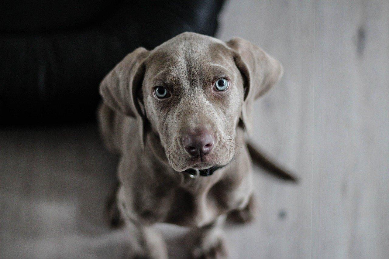 Hondenopvang Limburg